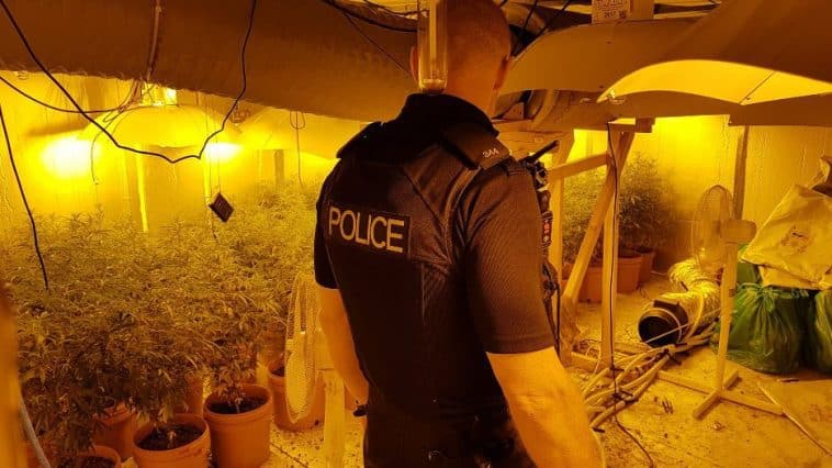 The cannabis factory found in Bridgwater