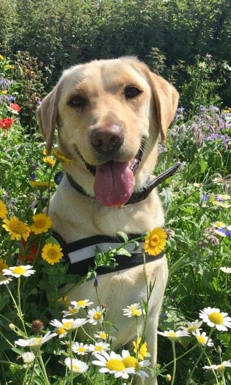Police Dog Fred
