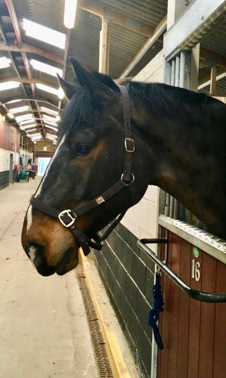 Police Horse Rolo