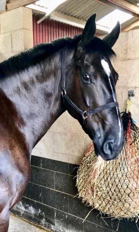 Police Horse Windsor