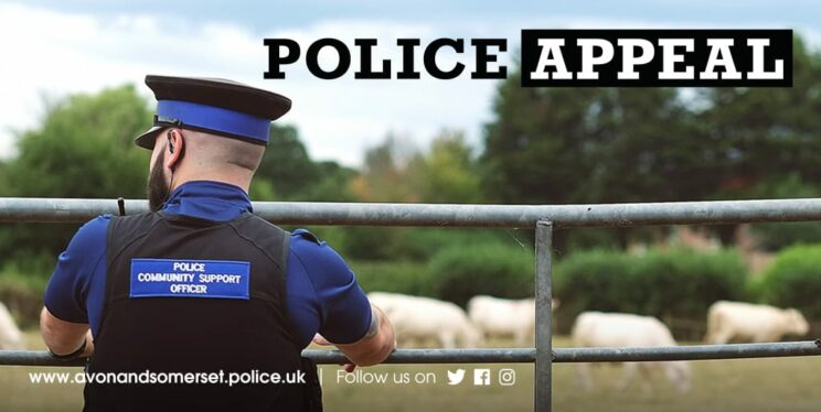 Appeal after cattle stolen in Somerset