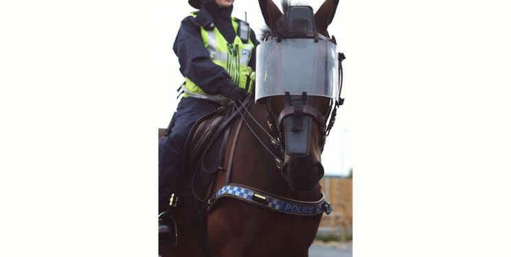 Image shows mounted officer on horse