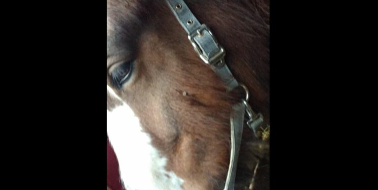 Witness appeal after horse shot with nail gun in Somerset 1